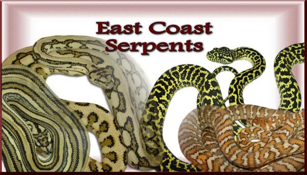 Jason Baylin from East Coast Serpents